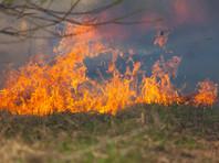 """В следующем году для России начало """"экологического долга"""" может наступить еще раньше - в частности, может сказаться огромный ущерб от лесных пожаров в Сибири"""
