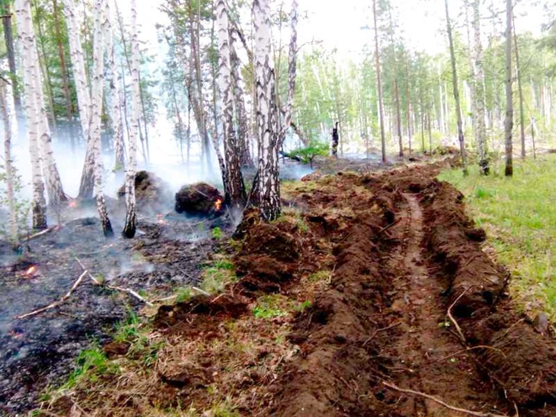 Площадь лесных пожаров в России увеличилась более чем на 7 тысяч гектаров