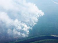 Площадь лесных пожаров все продолжает расти. Площадь действующих лесных пожаров уже составляет 4,5 млн га.