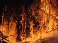 Рослесхоз заявил, что поджоги не могут быть причиной катастрофических пожаров в Сибири. Премьер Медведев не там ищет стрелочников
