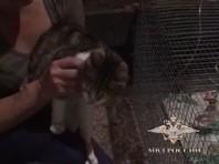 """Кот находился на """"ответственном хранении"""" в зооуголке в Новомосковске Тульской области. Несколько дней назад адвокат Дмитрий Сотников поехал туда, чтобы ознакомиться с усатым """"вещдоком"""", но выяснилось, что еще зимой кот сбежал"""
