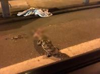 В Подмосковье у села Тарасовка грузовик сбил на дороге крокодила (ФОТО)