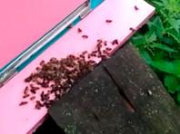 В Тульской области нашли виновных в массовой гибели пчел: это те, кто распылял в полях ядохимикаты