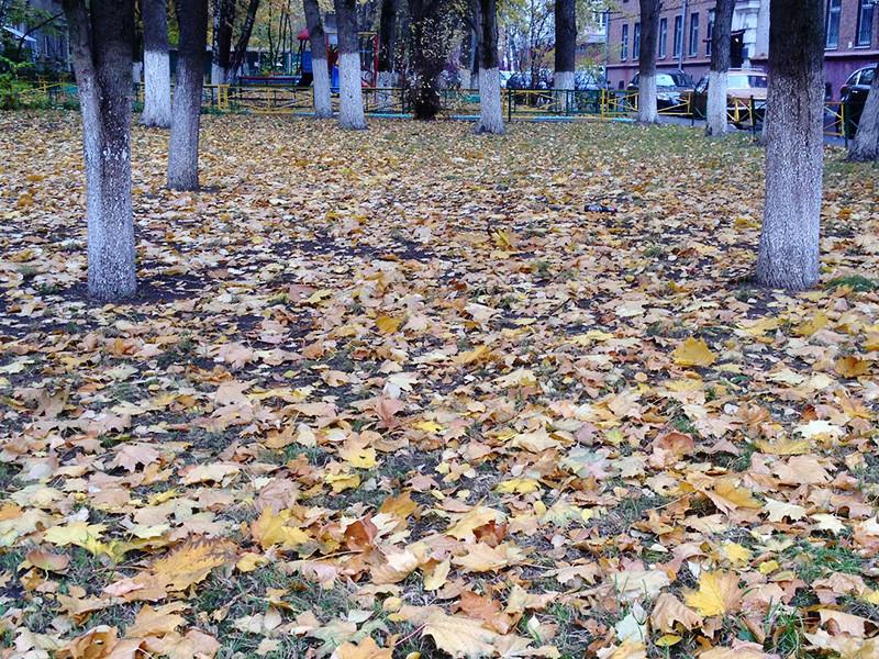 Уборка осенних листьев с московских газонов остается поводом для спора между властями и экоактивистами, которые настаивают, что вывоз опавших листьев вредит растениям