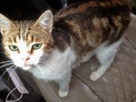 Находящийся в бегах кот-наркокурьер внезапно нашелся, но вызвал сомнения: лапы и нос не те (ФОТО)