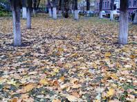 Иван Голунов выпустил новое расследование: мэрия Москвы потратила 850 млн рублей на вывоз с газонов опавших листьев, которые убирать нельзя
