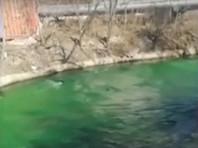 Во Владивостоке река Объяснения окрасилась в ядовито-зеленый цвет (ВИДЕО)