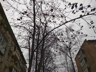 Аномально теплая погода в Москве побила температурный рекорд