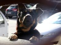 В целом нововведений также будет не так много, однако в число принципиально новых составов правонарушений войдут выгул собак опасных пород без намордника и поводка в общественных местах,