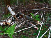 В Подмосковье участника акции против свалки в Ликино-Дулево допросили по делу о вырубке леса