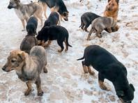 """Власти Омска планируют в 2020 году в рамках подпрограммы под названием """"Чистый и уютный город"""", входящей в муниципальную программу """"Формирование комфортной городской среды"""", отловить 2800 бездомных животных и утилизировать 1725 их трупов"""