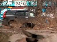 В Красноярске ввели режим ЧС в отдельных районах из-за нападений бродячих собак