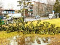 В Москве и Санкт-Петербурге зафиксированы температурные рекорды