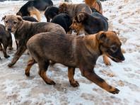 В Москве начался масштабный отлов животных из-за коронавируса