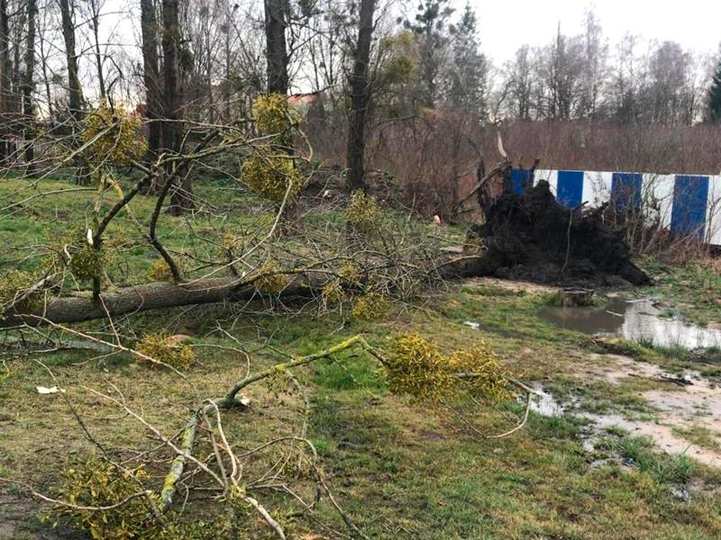 В Гурьевске в результате падения дерева погибла школьница