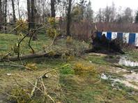 В Калининградской области мощный шторм валит деревья: погиб ребенок (ФОТО, ВИДЕО)
