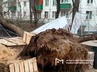 В Москве и области штормовой ветер повалил больше 100 деревьев: есть жертвы