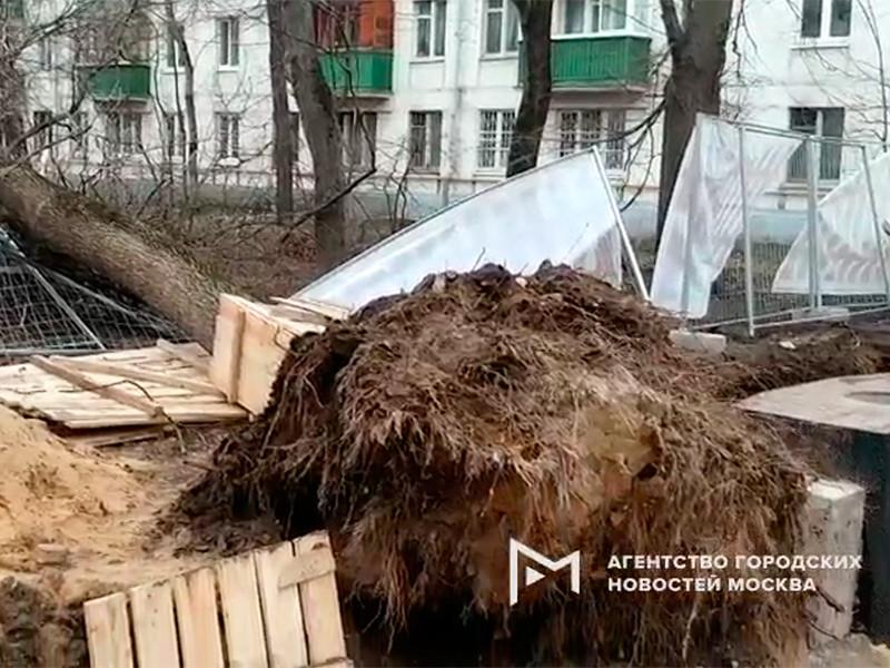 В Москве и области штормовой ветер повалил 70 деревьев и повредил автомобили