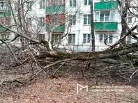 """Сильный ветер сохранится в Московском регионе до 21:00. До этого времени в регионе введен """"оранжевый"""" уровень погодной опасности"""