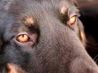 В Якутске в пункте передержки животных произошло массовое уничтожение собак и кошек. Зоозащитники обнаружили в пункте передержки около ста трупов животных, которых убили 7 марта