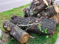 В Москве штормовой ветер повалил более 130 деревьев и повредил свыше 20 автомобилей (ФОТО)