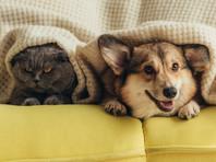Science: семейства кошачьих и куньих подвержены заражению новым коронавирусом, а собаки, свиньи и домашняя птица - едва ли