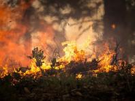 WWF: последствия лесных пожаров в России в 2020 году могут стать самыми значительными за последние десятилетия