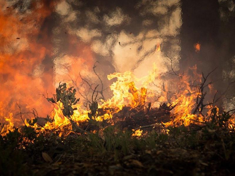 Площадь лесных пожаров в России за первые четыре месяца 2020 года превысила отметку в 4 млн га, негативные последствия пожаров в этом году могут стать самыми значительными за последние десятилетия