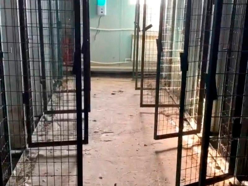 200 животных в якутском приюте были убиты удушающим препаратом