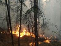 Из-за жары на территории Якутии значительно ухудшилась ситуация с лесными пожарами - их площадь по региону является самой большой по России