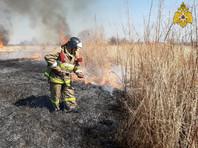 """""""Гринпис"""": с начала года в России выгорело лесов, степей и полей на территории больше площади Греции"""