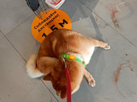 """В """"Аэрофлоте"""" заявили, что пострадавшая во время полета собака сама себе навредила"""
