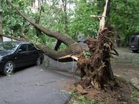 Вечером во вторник атмосферный фронт принес в столицу шквалистый ветер, ливни, грозу и град. В разных районах города ветром повалило больше 80 деревьев