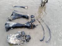 На Ямале рядом с поселком Сеяха  найдены останки мамонта