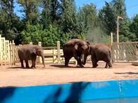 Ростовский зоопарк исключен из ассоциации ЕАРАЗА за продажу слоненка Большому цирку братьев Запашных