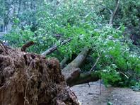 Пять человек пострадали при падении деревьев во время ливней в Подмосковье