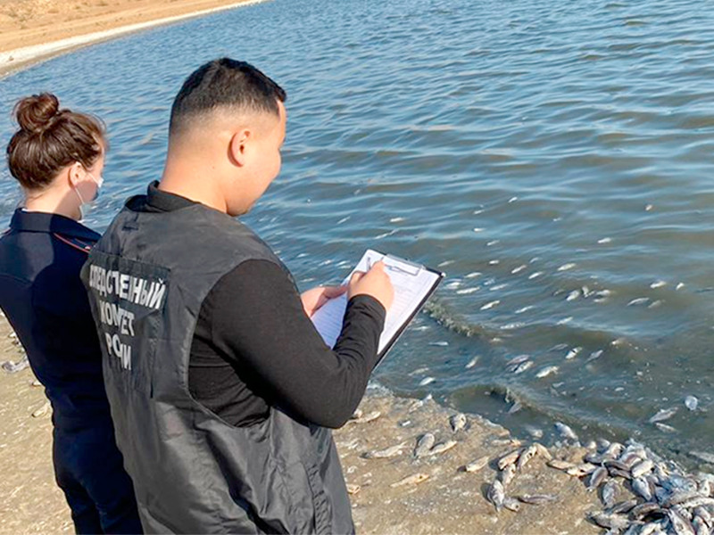 В Аршань-Зельменском водохранилище в Калмыкии зафиксирована массовая гибель рыбы