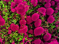 В России нарастающим итогом зарегистрировано 1 млн 513 тыс. 877 случаев (+1,1%) коронавирусной инфекции в 85 регионах. За весь период по России умерли 26 050 человек. Количество выписанных за весь период составило 1 млн 138 тыс. 522 человека