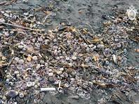 Следственный комитет России рассматривает природную причину в качестве основной версии загрязнения Авачинского залива