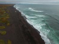 Ряд экспертов и чиновники склоняются к версии, что причиной гибели морских животных стали токсины, выделяемые водорослями