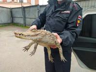 В Вологодской области мужчина, недавно освободившийся из колонии,  пришел в полицию с крокодилом