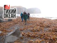 6 октября побережье Тихого океана обследовали Добровольцы Камчатского края
