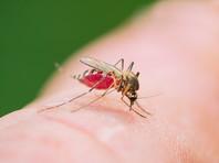Трое россиян, включая подростка, умерли от малярии после путешествия на Занзибар