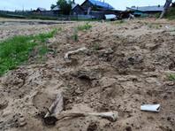 В Коми на берегу реки найдены останки двух человек и оленя