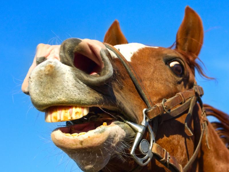 В центре Петербурга лошадь откусила нетрезвому мужчине часть носа