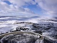Ученые предупредили о критических рисках для экосистем Арктики из-за нашествия опасного борщевика