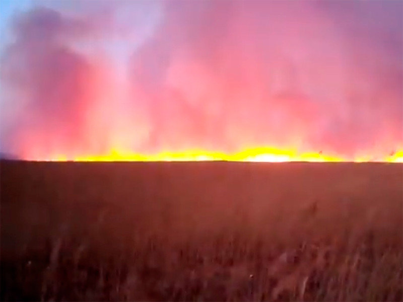 Almost half of the Khasansky natural park burned down in the Primorsky Territory
