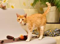 НИИ гриппа имени Смородинцева провел первое исследование COVID-19 у кота