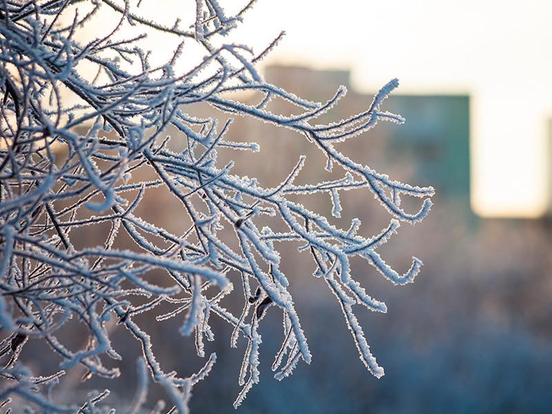 Синоптики сообщили, когда ждать самых холодных дней этой зимы в Москве и Подмосковье