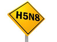 В России выявили первый в мире случай инфицирования человека птичьим гриппом A(H5N8), сообщила глава Роспотребнадзора Анна Попова